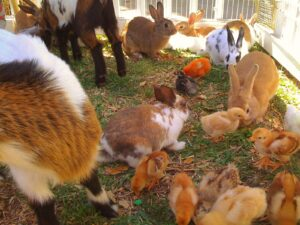 petting zoo for party rentals in miami